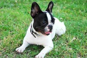 fonctionnement d'une assurance pour chien