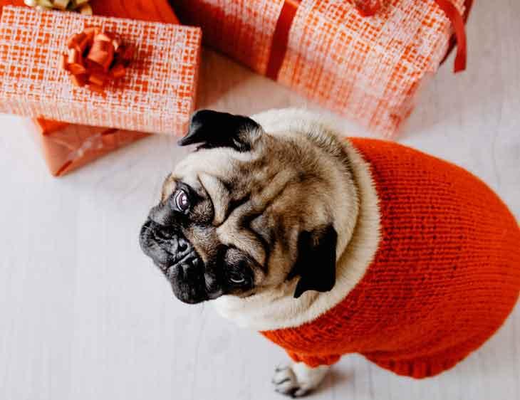chien et cadeau de Noel