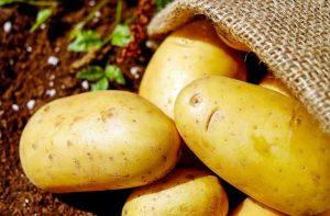Les pommes de terre crues sont toxiques pour le chien