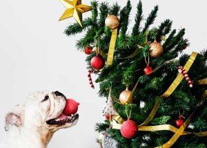 Les dangers des fêtes de fin d'année pour les chiens