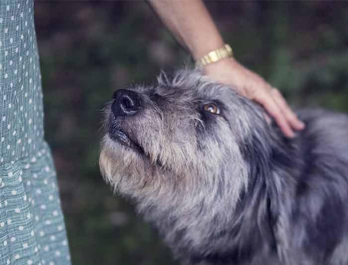 chien pour personne agee