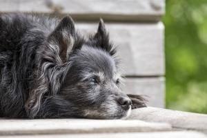 les garanties d'une mutuelle chien