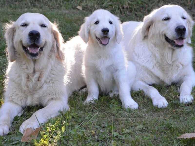 assurance chien guide d'aveugle