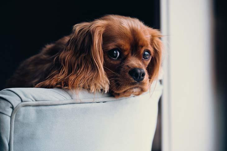 chien malpropre