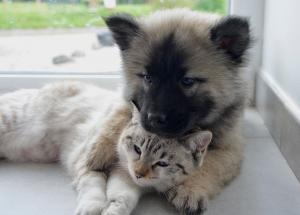 cout de l'assurance animaux