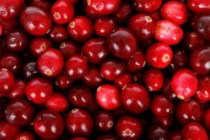 La cranberry pour le chien