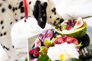 Des fruits pour chien