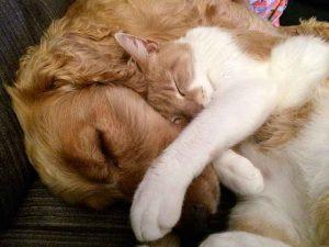 Dépenses de santé pour les chiens et les chats