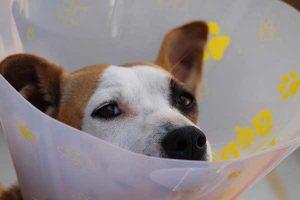 les tarifs vétérinaires