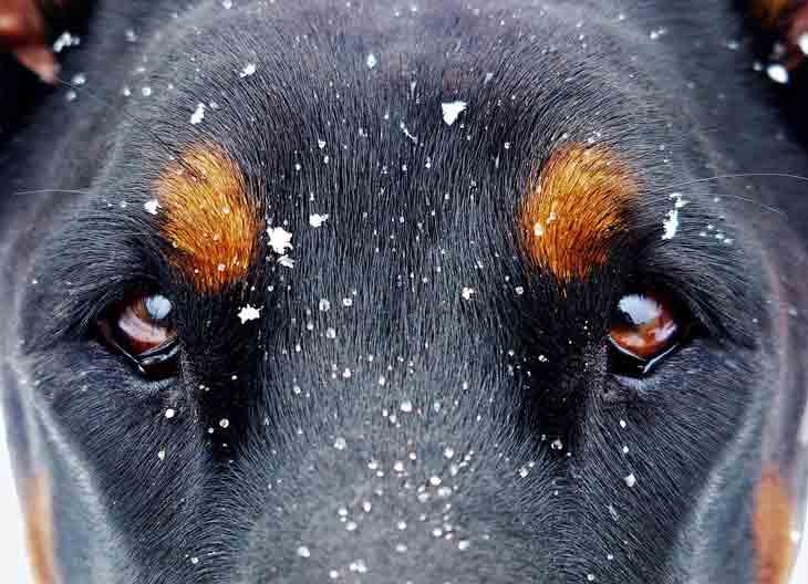 La vision du chien