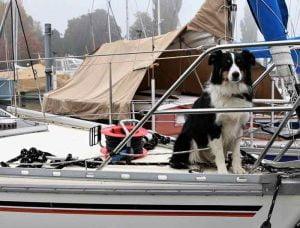 voyager en bateau avec son chien
