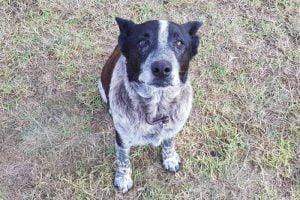 Max chien héros de 17 ans