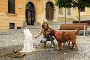 Un chien en ville