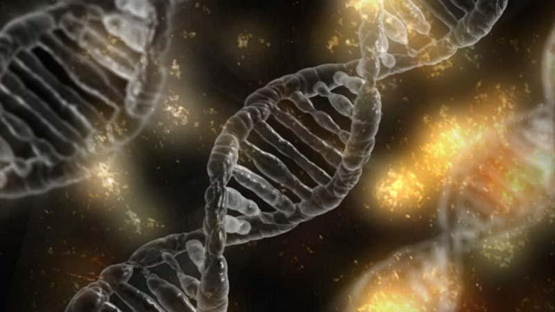Consanguinité et tare génétique du chien