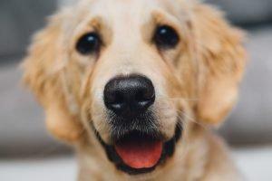 Ration ménagère pour chien