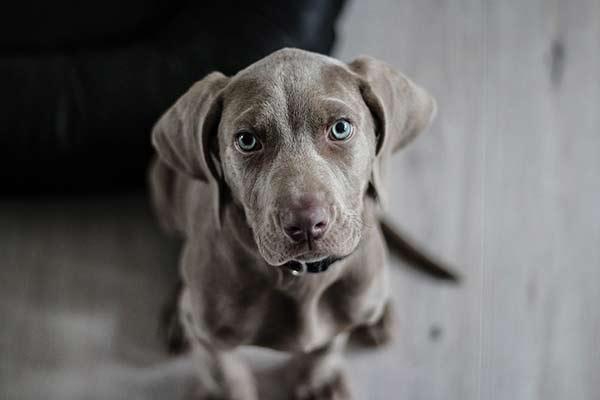 choisir un collier pour chien
