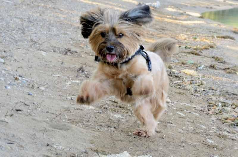 Un chien excité
