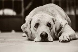 Un chien triste