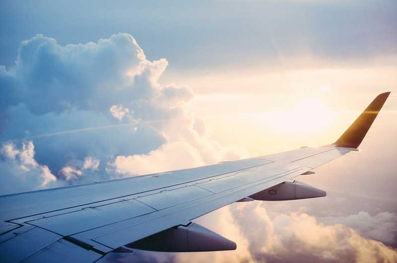 Un chien en avion