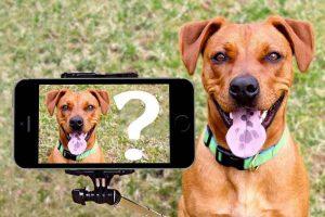 Application Doggzam!