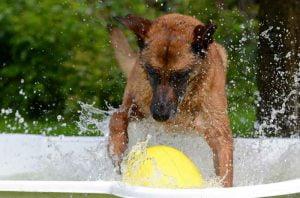 Les jeux d'eau pour chien