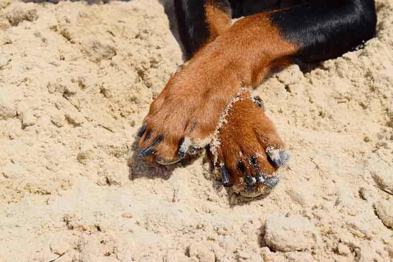 Des pattes de chien