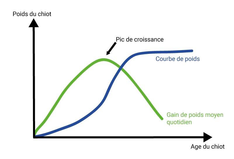 La courbe de croissance du chiot