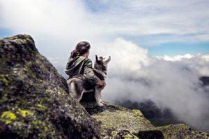 L'éducation du Husky