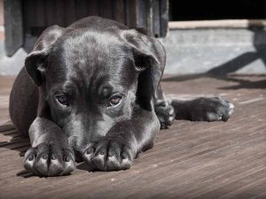 apprendre le non à son chien