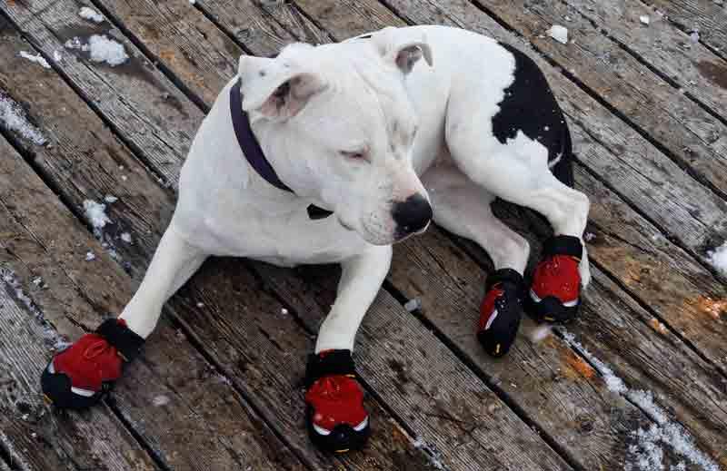 Les chaussures pour chien