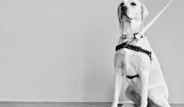meilleur collier pour chien qui tire