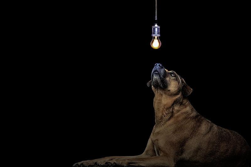 10 idées reçues sur les chiens
