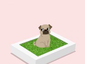 La litière pour chien