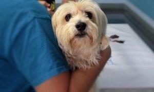 Ostéopathe pour chien