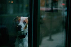 Combien de temps laisser seul un chien
