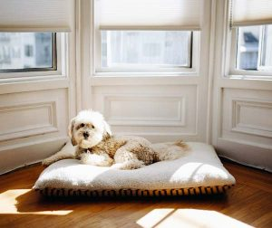 Un coussin pour chien