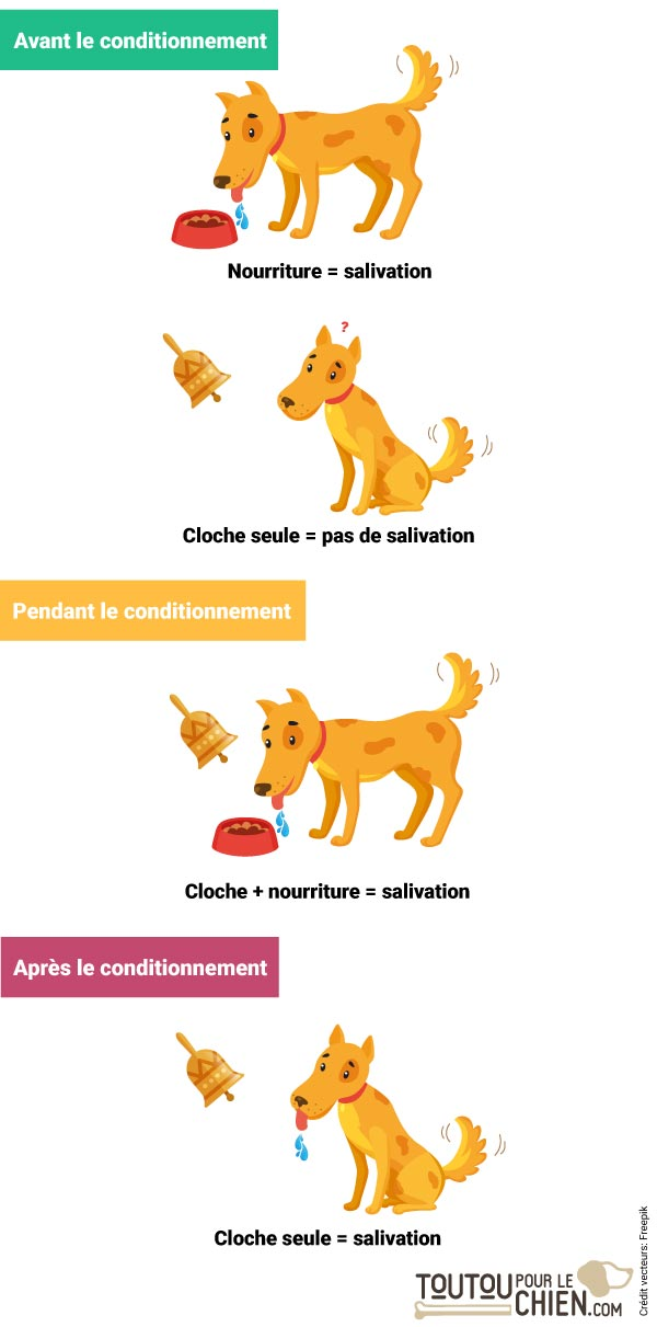 L'expérience du chien de Pavlov