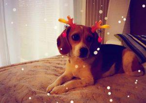 Filtre Snapchat pour chien