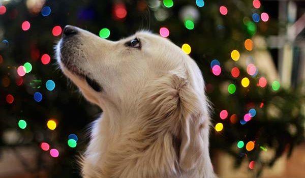 Faire plaisir à son chien à Noel