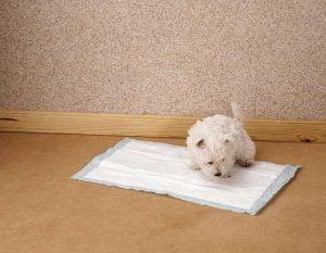 Le tapis de propreté pour chien