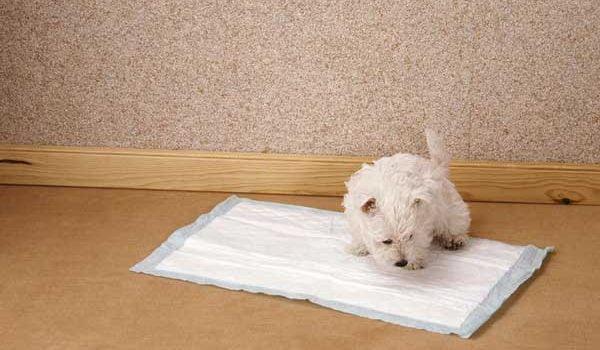 tapis de propret ou tapis d 39 ducation pour chien int r ts et prix. Black Bedroom Furniture Sets. Home Design Ideas