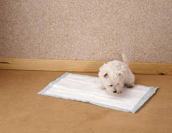 Tapis de propret ou tapis d 39 ducation pour chien int r ts et prix - Tapis de proprete encastrable ...