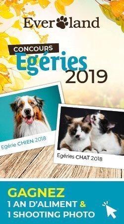 Egerie 2019 Everland