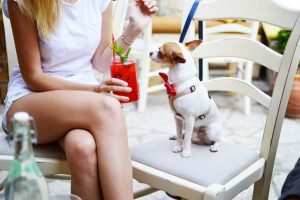 L'anthropomorphisme et le chien