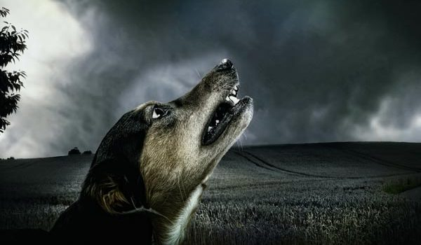 Mon chien aboie la nuit