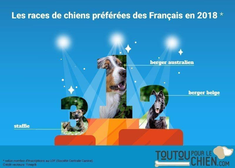 Le classement des chiens préférés des français en 2018