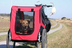 Remorque à velo pour chien