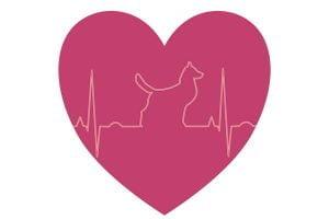 Le rhytme cardique du chien