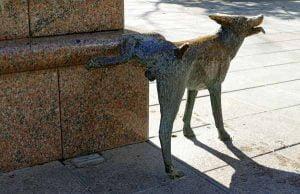 Un chien qui fait pipi en levant la patte