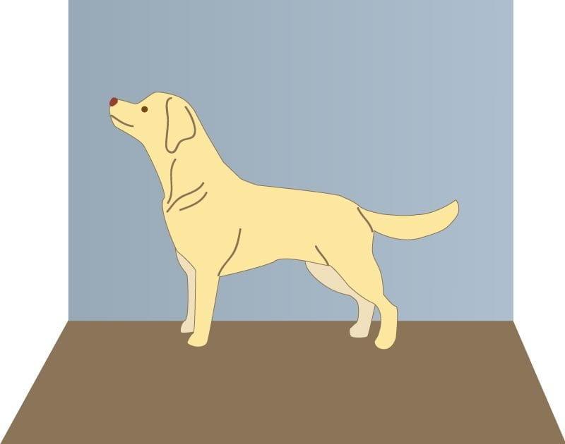Mettre son chien en position statique